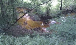 La rivière Sauvigny